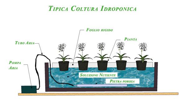 coltura-idroponica